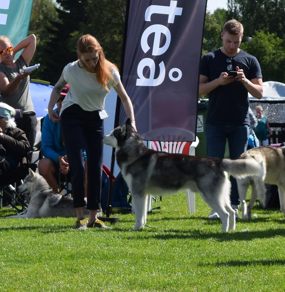 Piteå International Dog Show, Sweden 13 7 2019 - Kennel